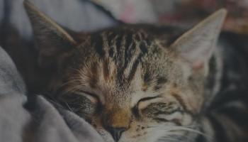 Beebi unetsüklid beebi unefaasid lühikesed päevauned sleep cycles catnaps short naps normal baby sleep